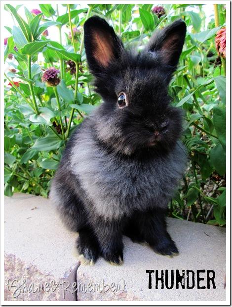 rp_my-bunny-thunder_thumb2.jpg
