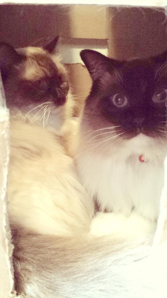 cats in the box #WalgreensRx #shop