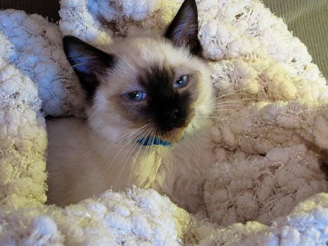Sick cat #WalgreensRx #shop #cbias