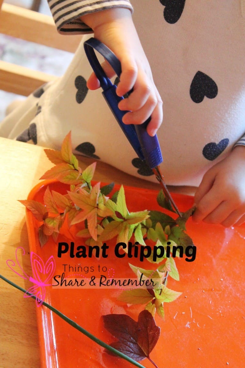 plant clipping science