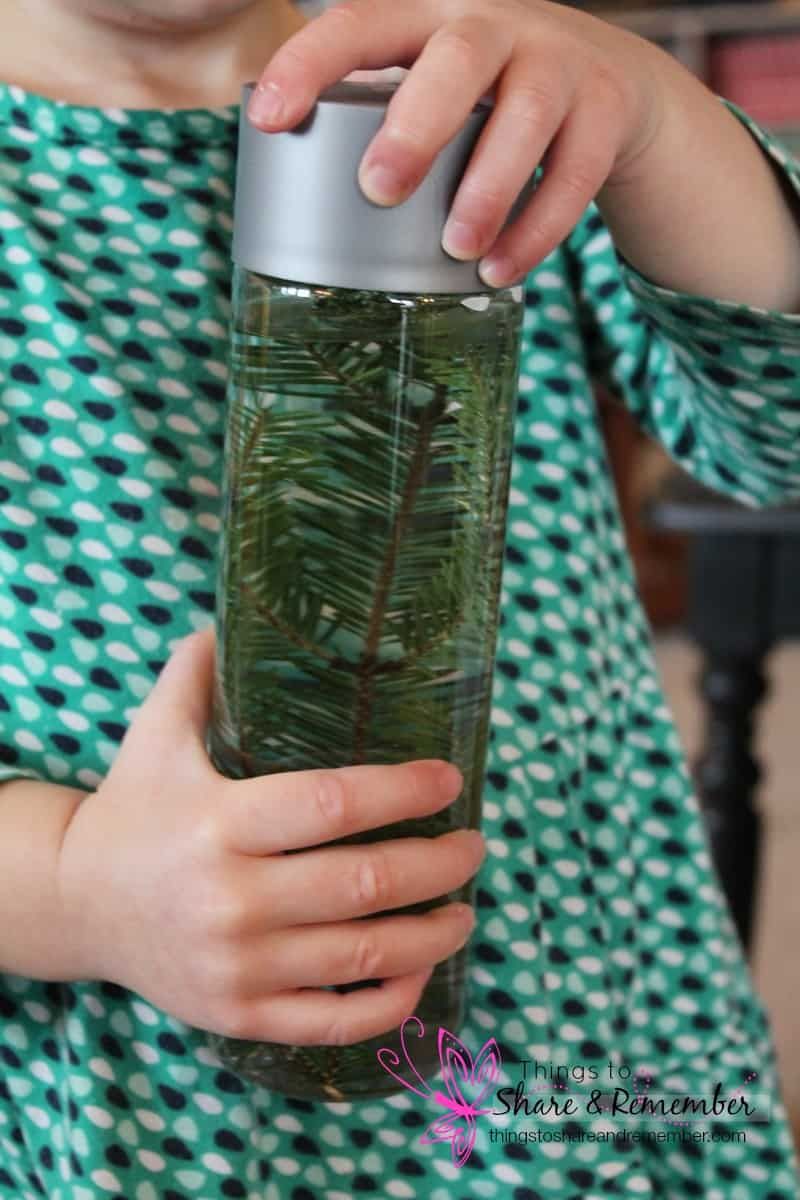 evergreen sensory bottle