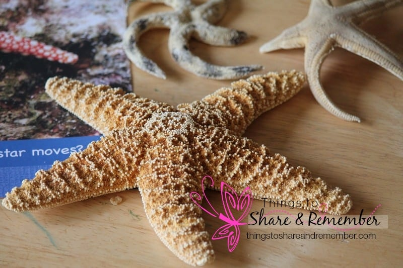 Ocean Commotion Sea Stars #MGTblogger