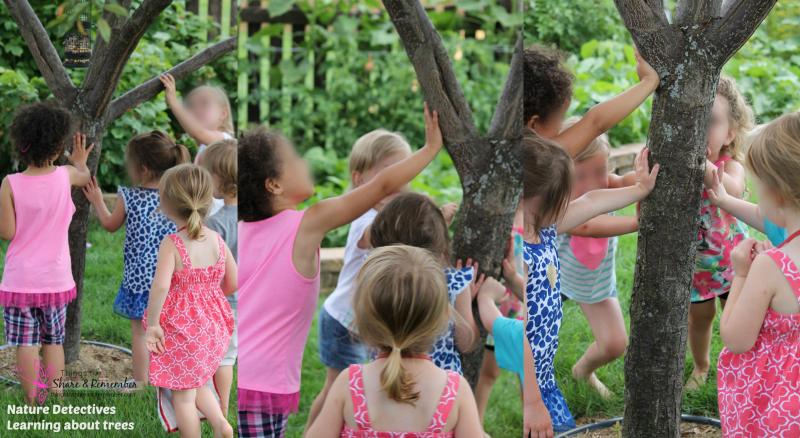 trees & preschoolers