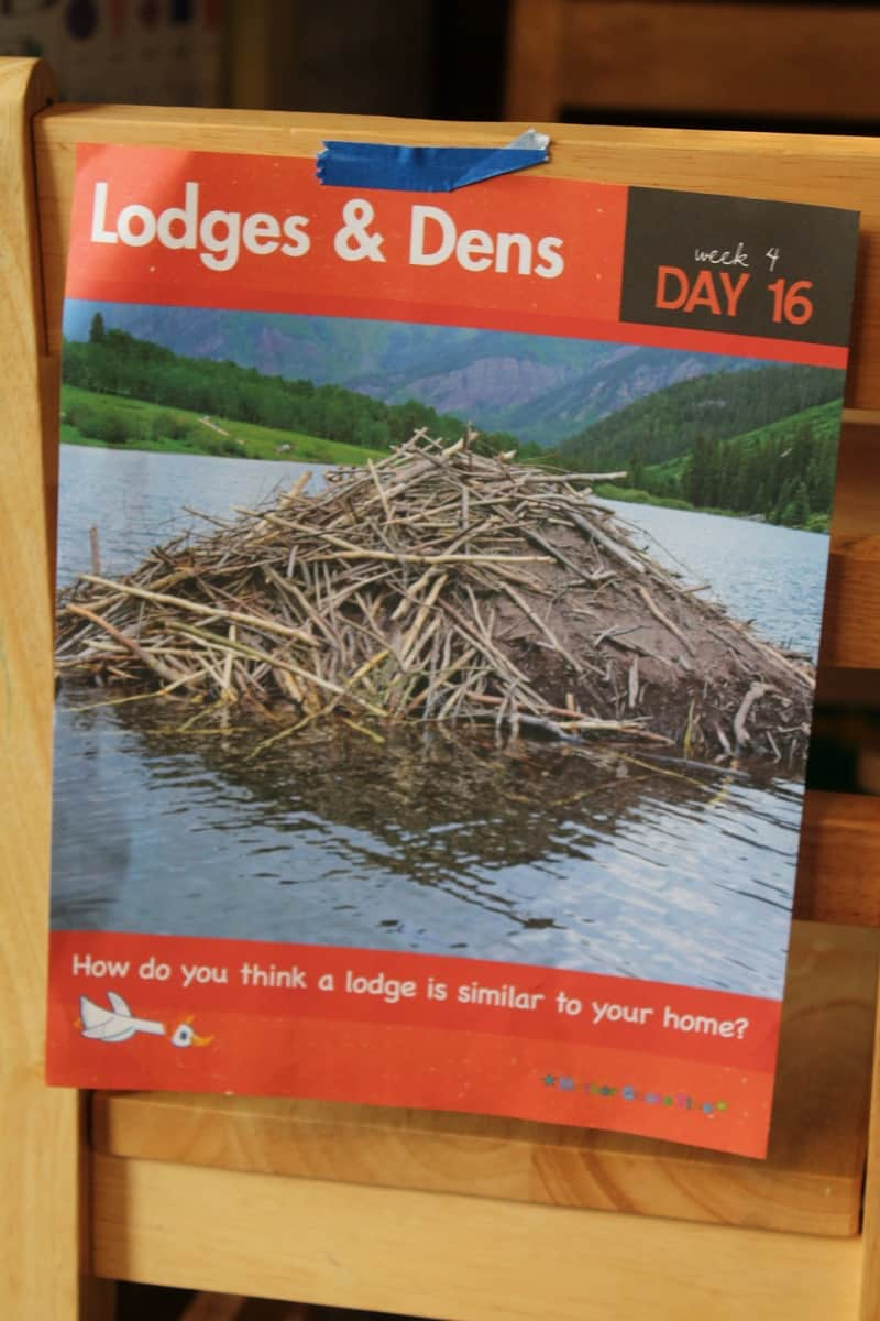 Animal Homes: Beaver Lodge #MGTblogger