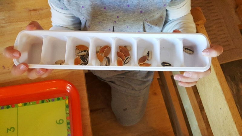 sorting seeds into tray in preschool - use an ice cube tray to sort and count seeds - fall preschool theme Exploring Seeds in Preschool - sunflower and garden sensory bin for fall orchard theme