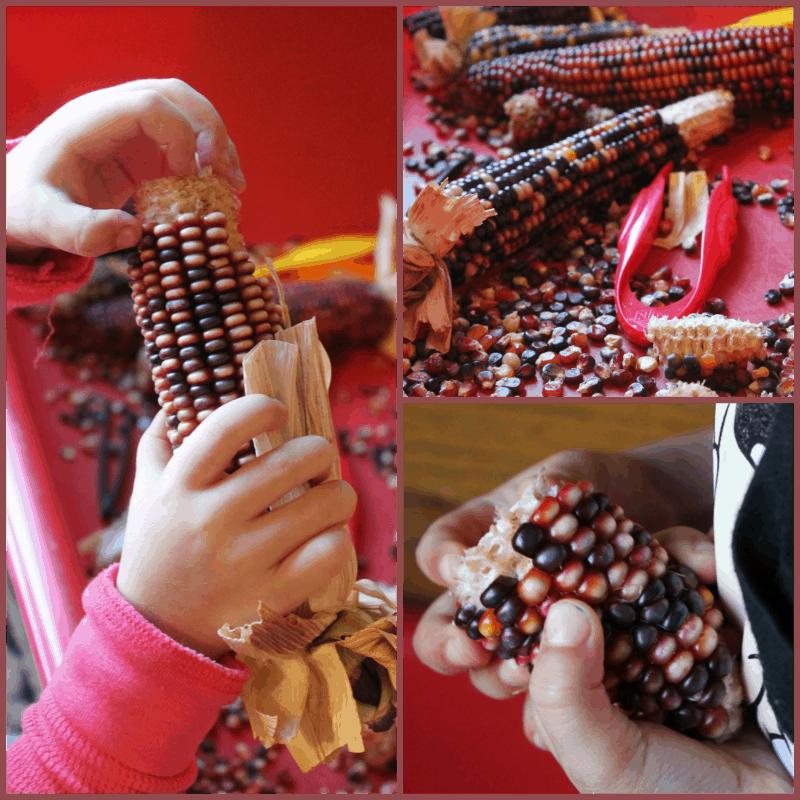 Indian Corn Sensory Play
