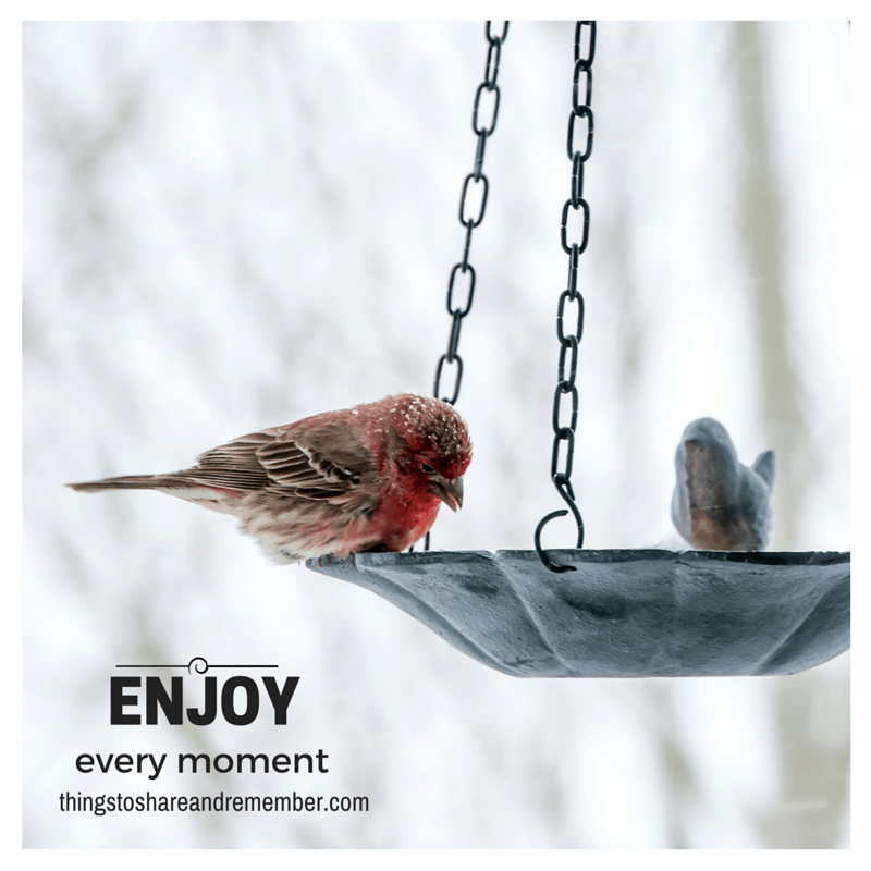 Enjoy every moment - SR JAN