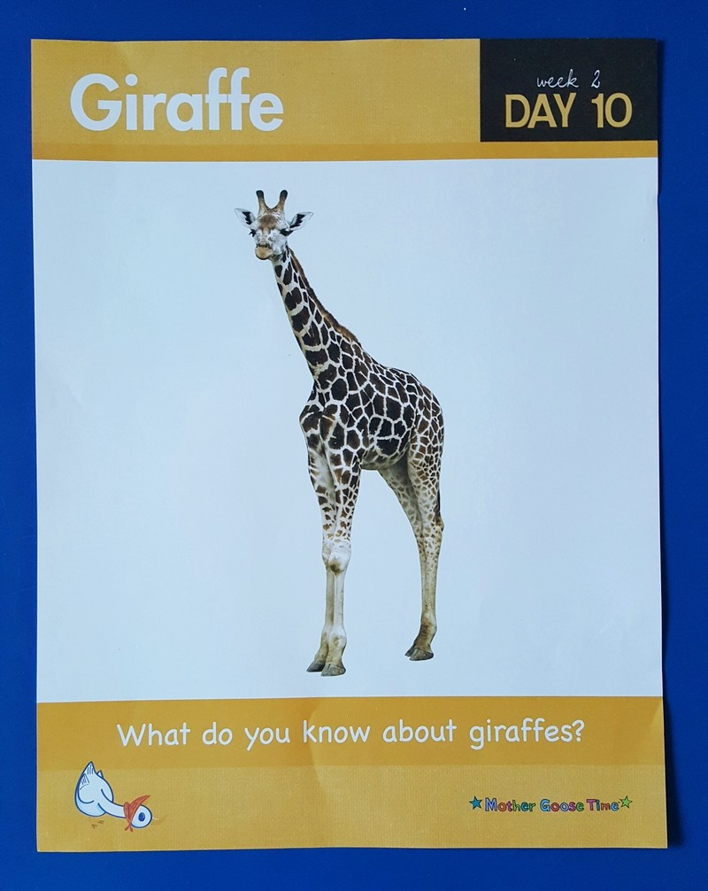 Learning about giraffes -giraffe daily poster