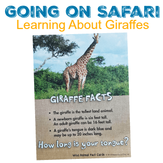going on safari learning about giraffes