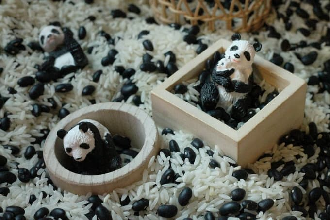 Black and white panda bear sensory bin