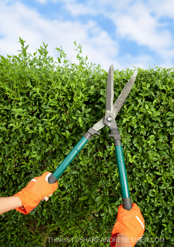 pruning shears trimming hedges