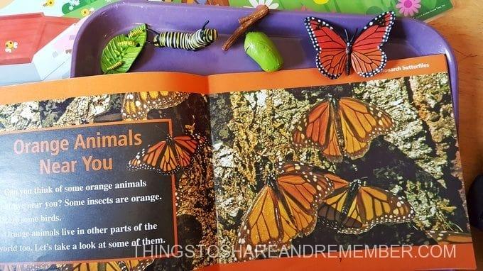 Colors of a Monarch