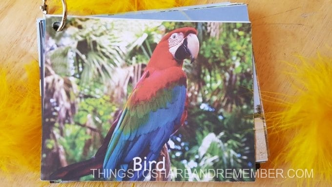 B is for B #MGTblogger Parrot card