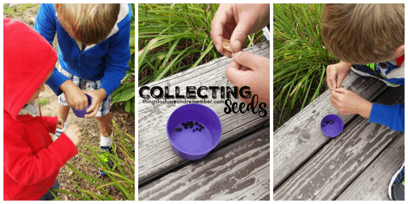 collecting-seeds
