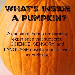 What's Inside a Pumpkin?