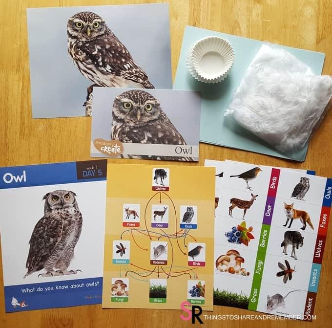 day-5-owl