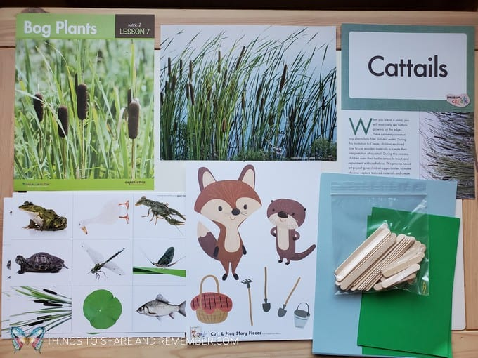 preschool bog plants lesson pond life theme
