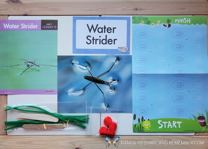 preschool water strider lesson pond life theme
