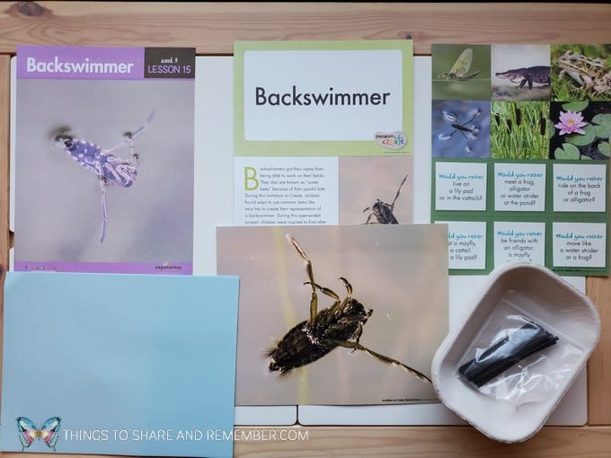preschool backswimmer lesson pond life theme