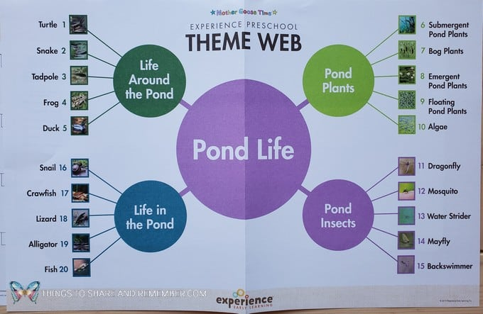 Theme Web for Pond Life Experience Early Learning preschool curriculum