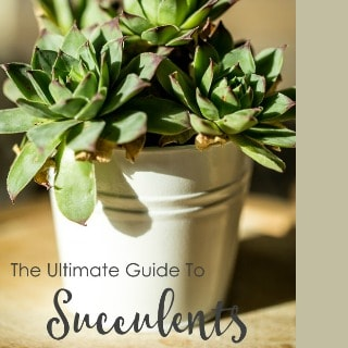 The Ultimate Guide to Succulents