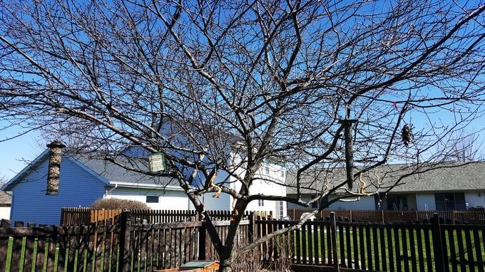 bird feeders in the tree