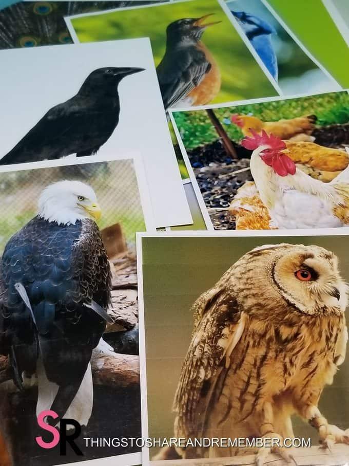 Bird Sounds Listening Activity with Bird Photos Printable