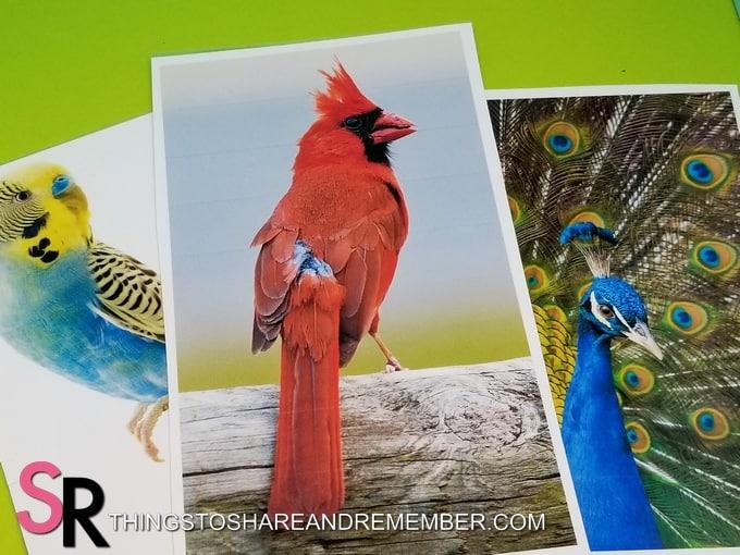 bird photos printable