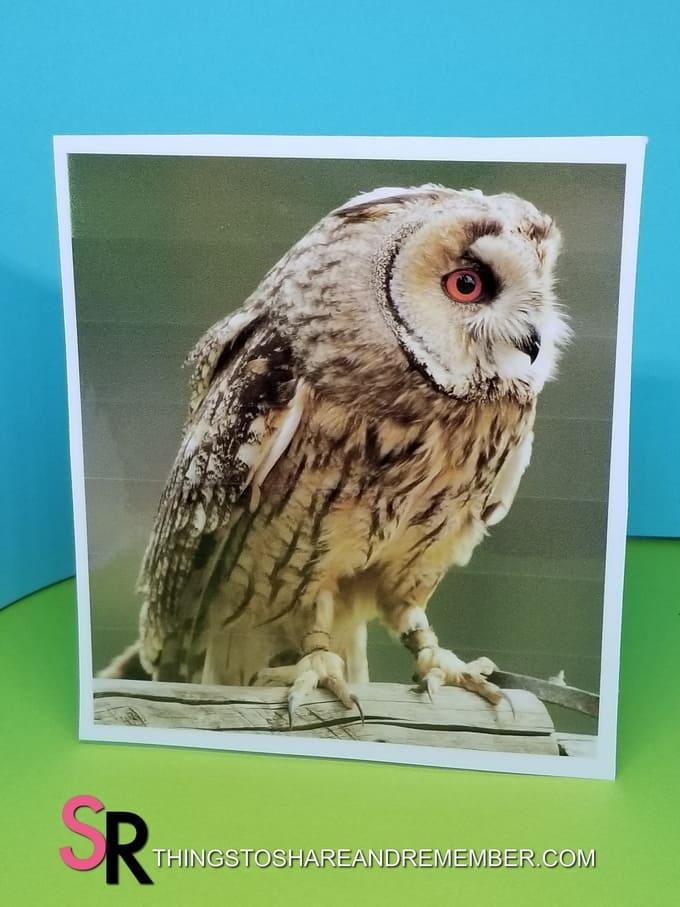 owl bird photo printable
