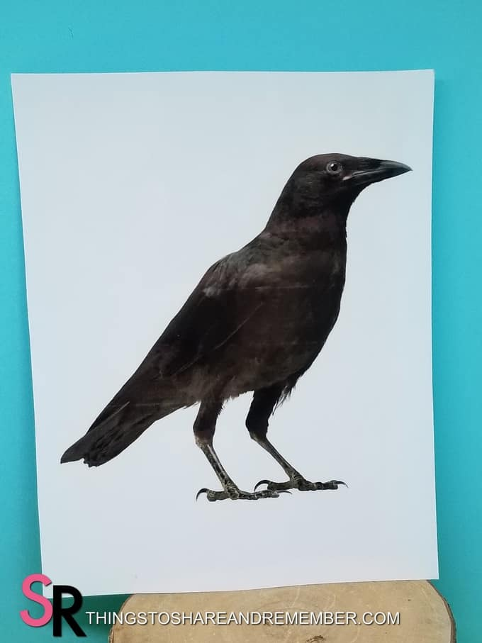 crow bird printable