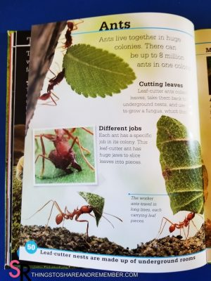 Bugs book ant page