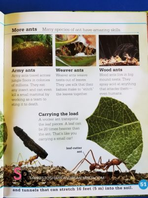 all about bugs ants