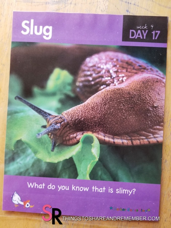 Slug day 17 Bugs & Crawly Things theme