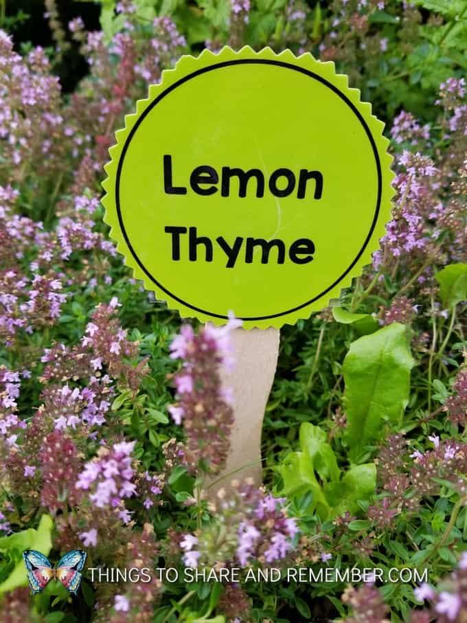 lemon thyme garden marker