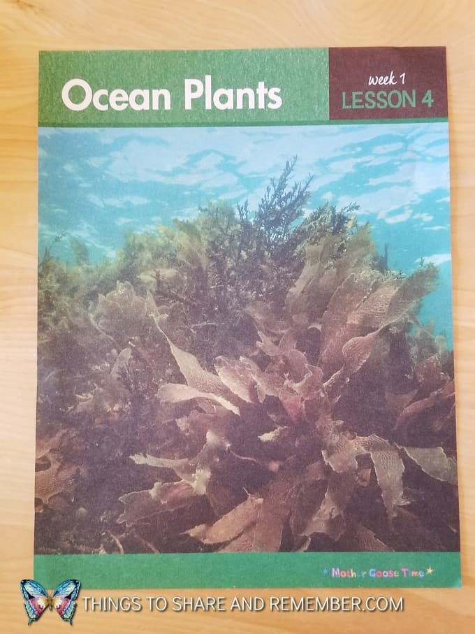 Mother Goose Time Preschool Curriculum Ocean Plants daily topic poster