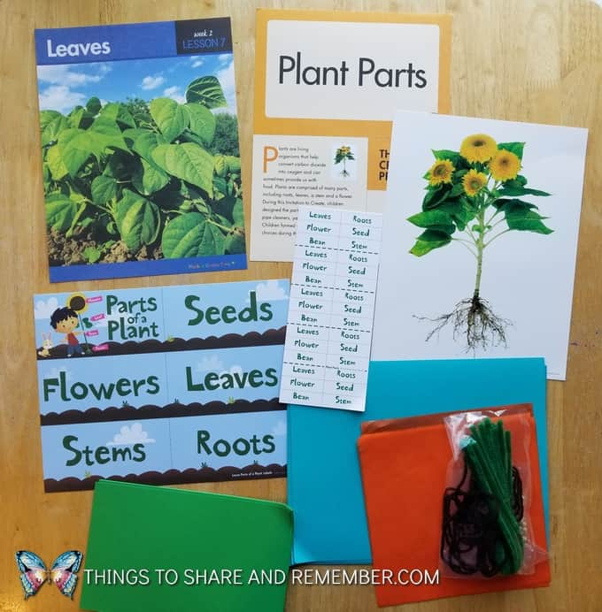 What's in the Box? Growing Gardens Preschool Theme plants
