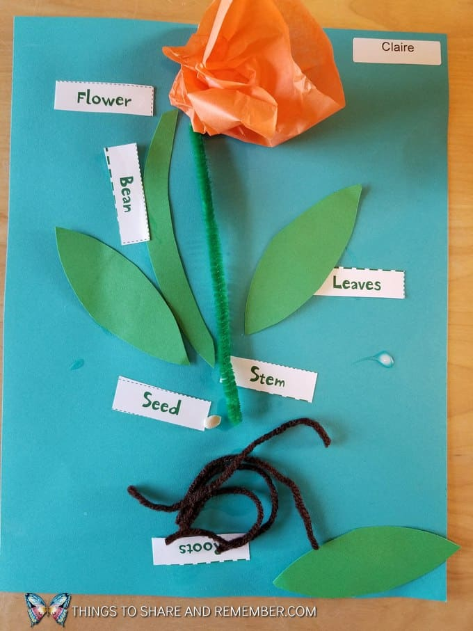 Parts of a bean plant diagram art for preschool gardening theme parts of a bean plant diagram art ccuart Image collections