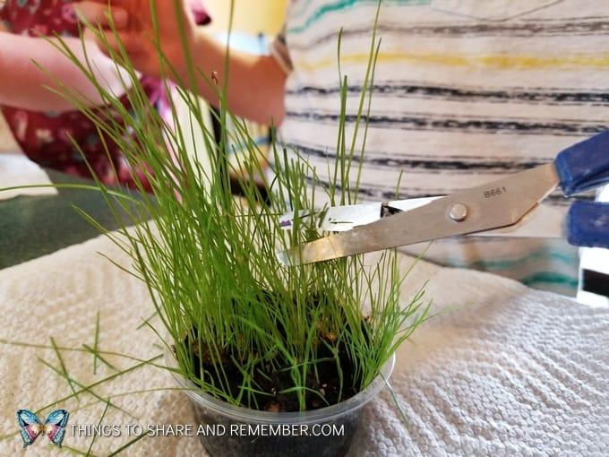cutting grass with scissors in preschool