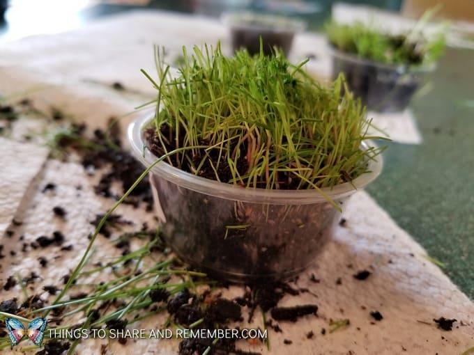 cut grass plants
