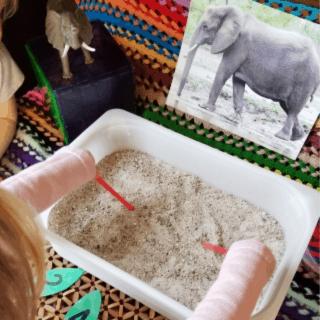 Going on Safari Elephant Digging Tusks