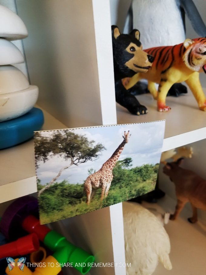 giraffe picture for Going on Safari dramatic play Going on Safari preschool theme binoculars craft and related activities for preschoolers #MGTBlogger #MotherGooseTime #preschool #preschoolcurriculum #GoingOnSafari #safaritheme