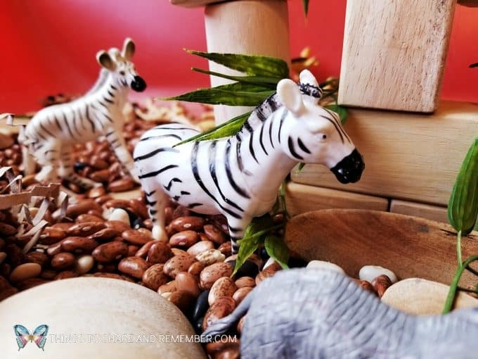 zebras in the Safari Habitat Sensory bin with animals for preschoolers Going on Safari theme from Mother Goose Time preschool curriculum #MGTblogger #MotherGooseTime #preschool #GoingonSafari #sensorybin #sensoryplay #smallworld #invitationtoplay