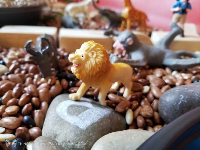 Lion in the safari sensory bin Safari Habitat Sensory bin with animals for preschoolers Going on Safari theme from Mother Goose Time preschool curriculum #MGTblogger #MotherGooseTime #preschool #GoingonSafari #sensorybin #sensoryplay #smallworld #invitationtoplay