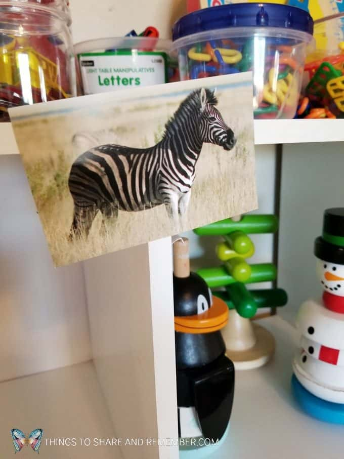 zebra in the wild dramatic play Going on Safari preschool theme binoculars craft and related activities for preschoolers #MGTBlogger #MotherGooseTime #preschool #preschoolcurriculum #GoingOnSafari #safaritheme