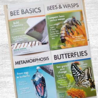 What's in the Box Bees and Butterflies