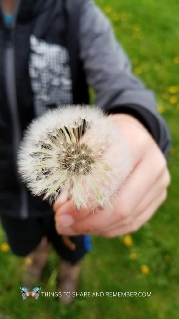 child holding white dandelion