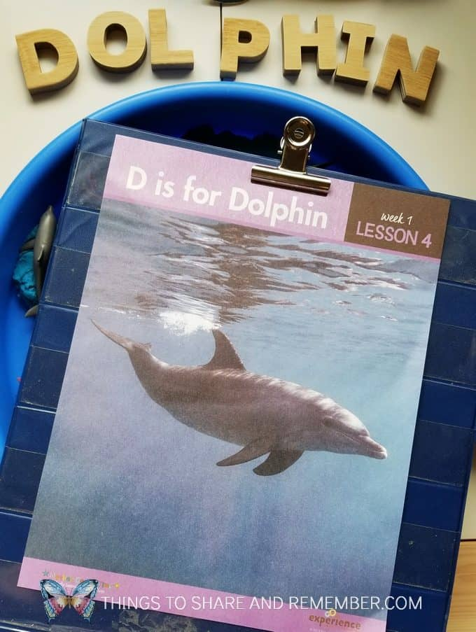 D is for Dolphin daily topic page dolphin