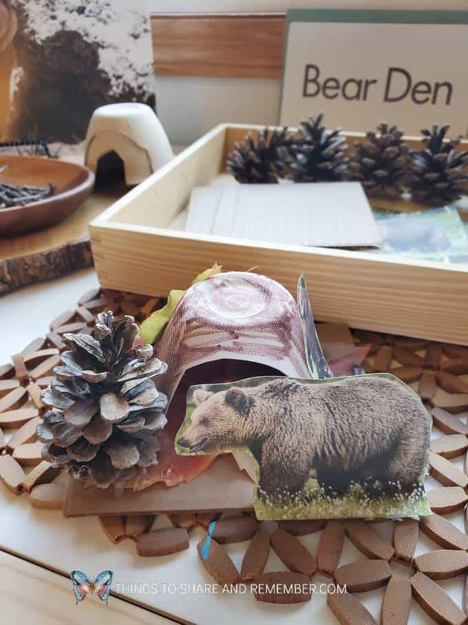 B is for Bear Den Winter in the Woods Experience Early Learning Preschool Curriculum