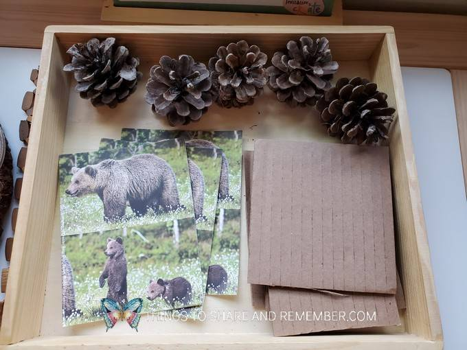 bear photos, cardboard and pinecones to make bear dens