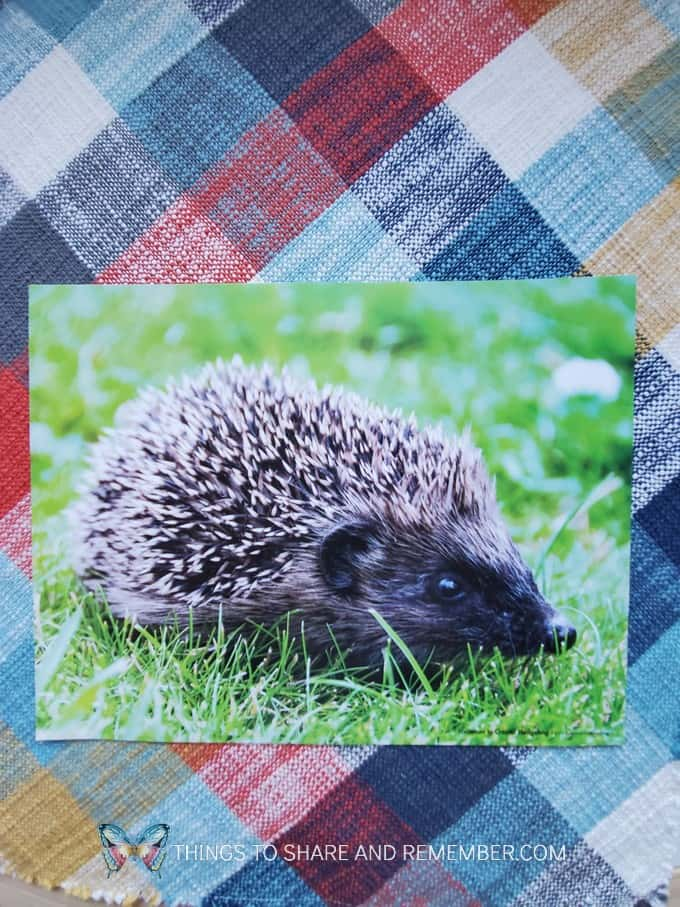 Hedgehog inspiration photo Pokey like a Hedgehog
